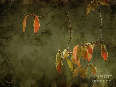 Photograph - Autumn Colours by Eena Bo