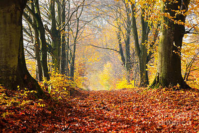 Concept Photograph - Autumn Fall Forest by Michal Bednarek