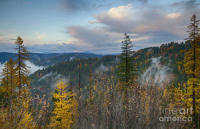 Photograph - Autumn Forest by Idaho Scenic Images Linda Lantzy