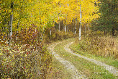 Photograph - Autumn Journey by Idaho Scenic Images Linda Lantzy