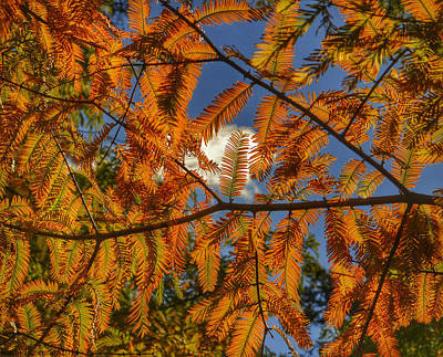 Photograph - Autumn Leaves I by Kathi Isserman