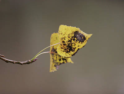 Photograph - Autumn Leaves by Masami Iida