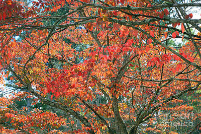 Photograph - Autumn Leaves by Rafael Salazar