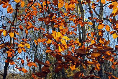 Photograph - Autumn Leaves by Tony Murtagh