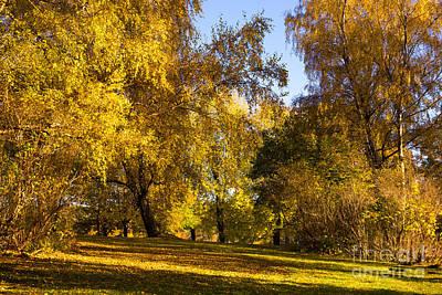 Photograph - Autumn Sunlight by Lutz Baar