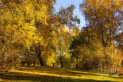 Autumn Landscape Photograph - Autumn Sunlight by Lutz Baar