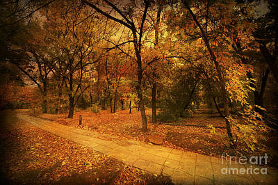 Fall Bushes Digital Art - Autumn Path by Svetlana Sewell