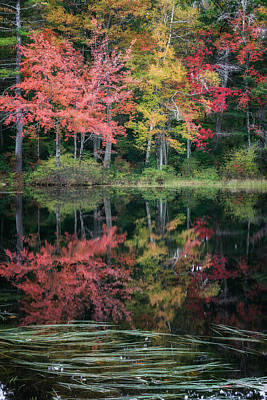New England Fall Foliage Photograph - Autumn Pond by Bill Wakeley
