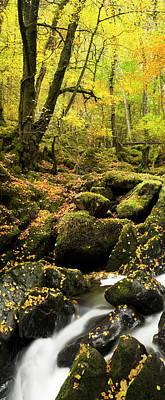 Photograph - Autumn Woods by Jeremy Walker
