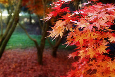 Leaves Changing Photograph - Autumnal Forest by Les Cunliffe
