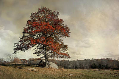 Photograph - Autumn's Last Breath by Robin-Lee Vieira