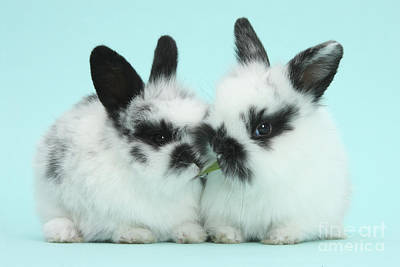 House Pet Photograph - Baby Bunnies by Mark Taylor