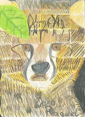 Cheetah Drawing - Baby Cheetah Looking by Fred Hanna