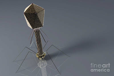 Photograph - Bacteriophage by Science Picture Co
