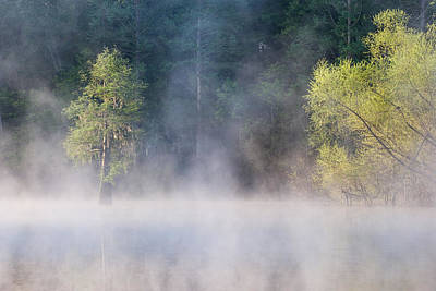 Photograph - Bald Cypress And Willows On Foggy by Jeffrey Lepore