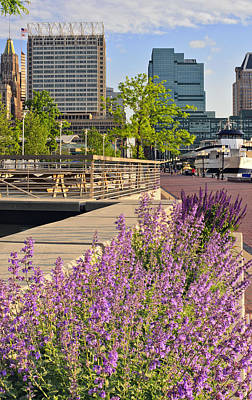 Art Print featuring the photograph Baltimore Spring Flowers by Marianne Campolongo
