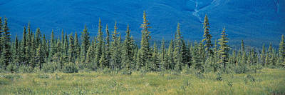 Conifer Tree Photograph - Banff National Park Alberta Canada by Panoramic Images