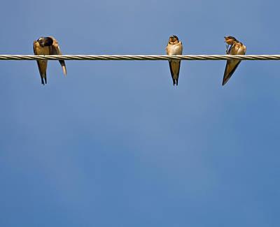 Barn Swallows Art Print by Melinda Fawver