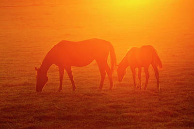 Grazing Horse Photograph - Bay-colored Riding Horses On Ranch by Larry Ditto