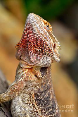 Dragon Photograph - Bearded Dragon by George Atsametakis