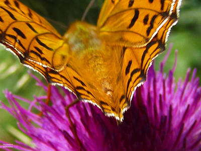 Photograph - Beautiful Butterfly by Alexandros Daskalakis