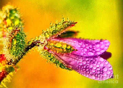 Vivid Colour Painting - Beautiful Flower by Odon Czintos