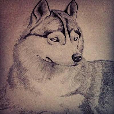 Beauty Of The Husky Art Print
