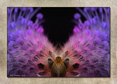 Photograph - Beaver Peacock by WB Johnston