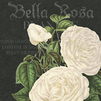 Delicate Drawing - Bella Rosa Square by Gail Fraser
