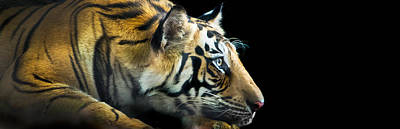 Bengal Tiger Panthera Tigris Tigris Art Print by Panoramic Images