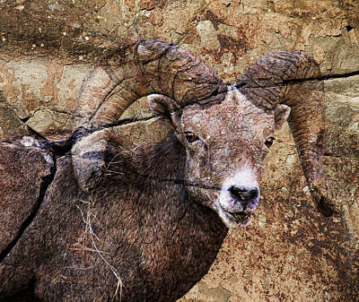 Bighorn Rock Art Print by Steve McKinzie