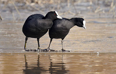 Photograph - Bird Lovers by Dreamland Media