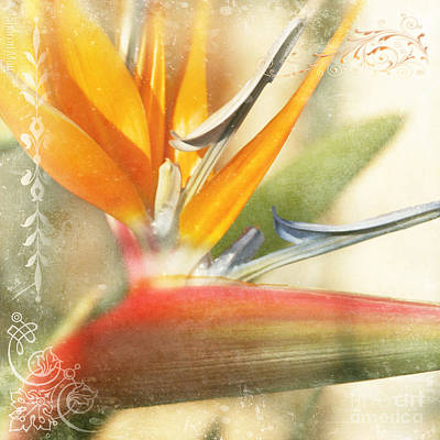 Bird Of Paradise - Strelitzea Reginae - Tropical Flowers Of Hawaii Art Print by Sharon Mau