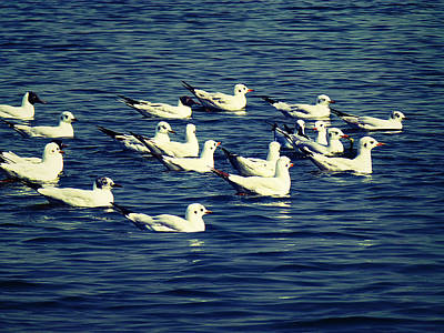 Commercial Photograph - Birds In River by Girish J