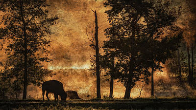 World No. 1 Painting - Bison  Bison Bison Athabascae  Grazing by Ron Harris