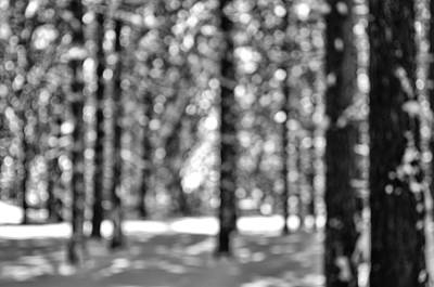 Hike Photograph - Black And White Trees In A Forest by Brandon Bourdages