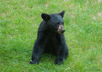 Videos young black bear men