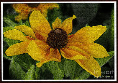 Photograph - Black Eyed Susan  Flower by James C Thomas
