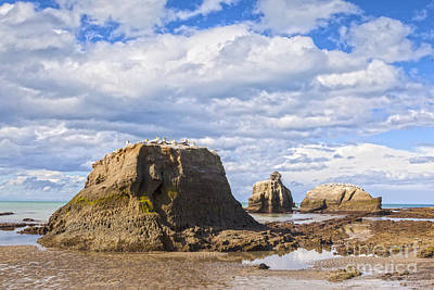 Hawkes Bay Photograph - Black Reef Gannet Colony New Zealand. by Colin and Linda McKie