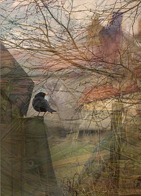 Photograph - Blackbird by Liz  Alderdice