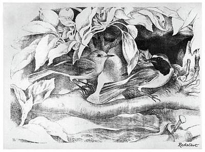 Turn Of The Century Drawing - Blackburn Birds, 1895 by Granger