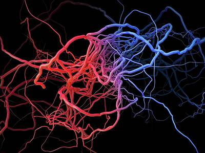 Blood Vessels Art Print