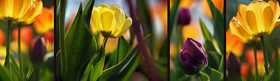 Photograph - Blooming Colors by Leda Robertson