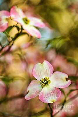 Blooms Of Spring Art Print by Darren Fisher