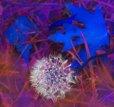 Digital Art - Blowing In The Wind by Ian  MacDonald