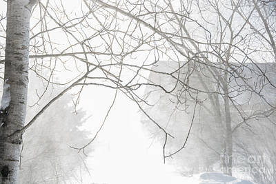 Photograph - Blowing Snow by Cheryl Baxter