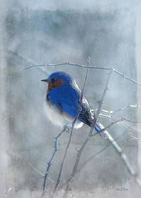 Birds In Snow Wall Art - Photograph - Blue Bird  by Fran J Scott