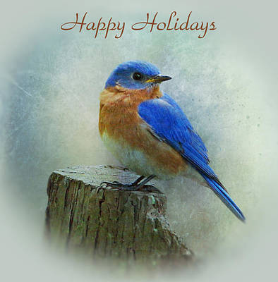Photograph - Bluebird Holiday Card by Sandy Keeton
