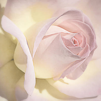Photograph - Blushing Petals by Julie Palencia