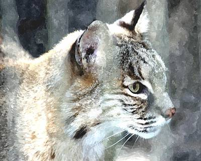 Bobcats Mixed Media - Bobcat by Barry Spears